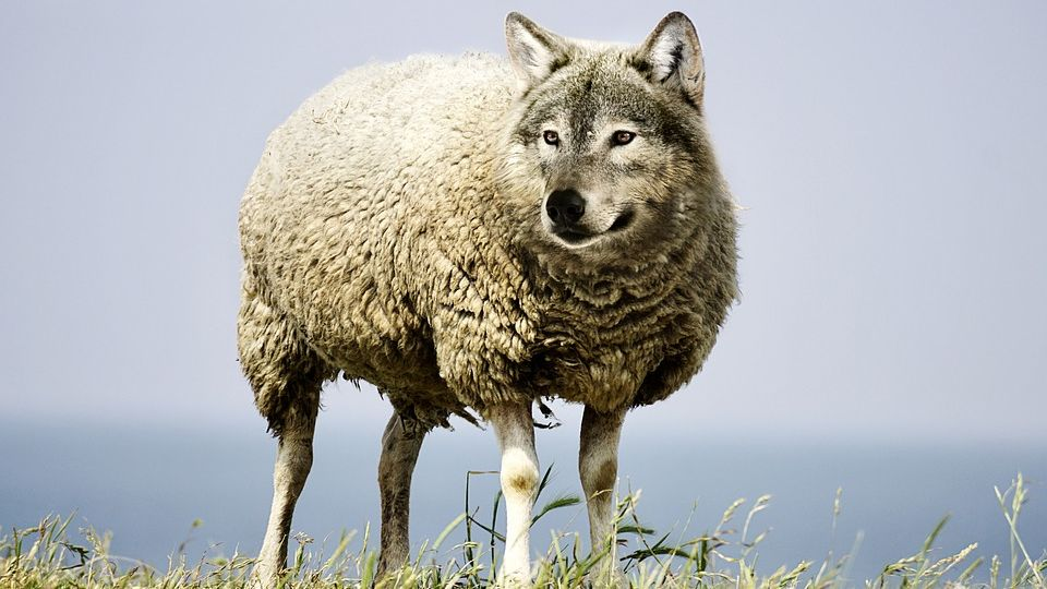 wolf-in-sheeps-clothing-2577813_960_720